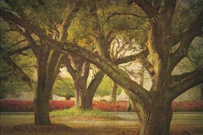 Three Oaks and Azaleas