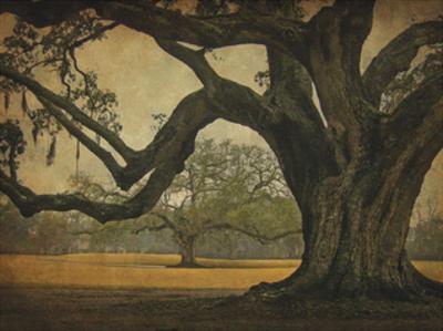 Two Oaks in Rain, Audubon Gardens