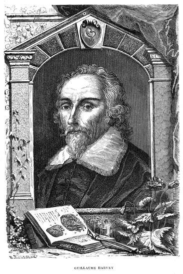 William Harvey (1578-165) English Physician, C17th Century--Giclee Print