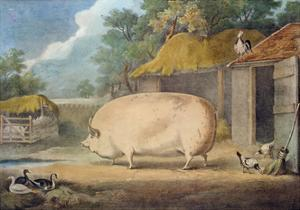 A Leicester Sow, 2 Years Old, the Property of Samuel Wiley by William Henry Davis
