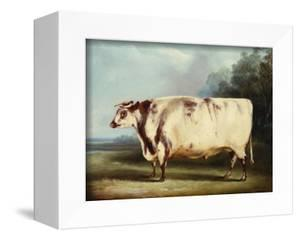 A Prize Bull by William Henry Davis