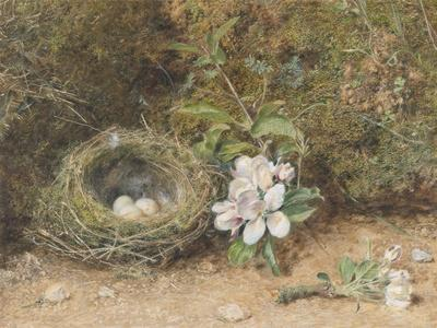 Bird's Nest with Sprays of Apple Blossoms
