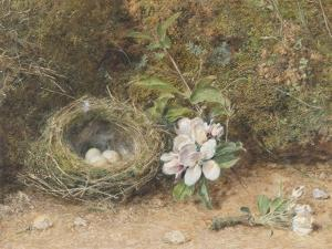 Bird's Nest with Sprays of Apple Blossoms by William Henry Hunt