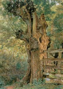 Pollard Elm on the Edge of the Village Pound by William Henry Hunt