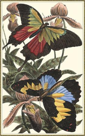 Butterfly III by William Henry Pearson