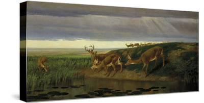 Deer on the Prairie, 1884