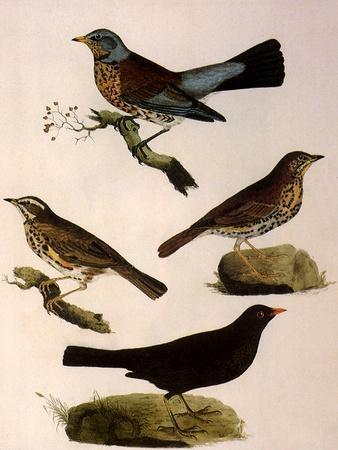 Four Perching Birds