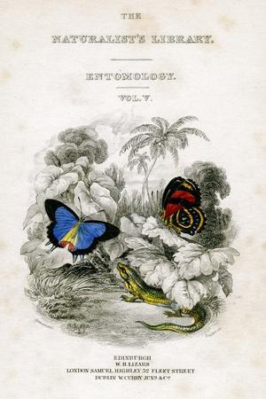 The Naturalist's Library, Entomology, Vol V, Butterflies, C1833-1865