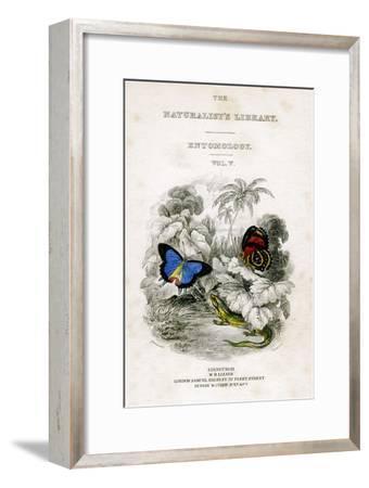 The Naturalist's Library, Entomology, Vol V, Butterflies, C1833-1865