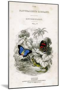 The Naturalist's Library, Entomology, Vol V, Butterflies, C1833-1865 by William Home Lizars