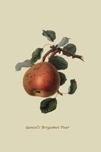 Gansel's Bergamot Pear by William Hooker