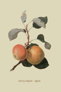 Kerry Pippin - Apple by William Hooker