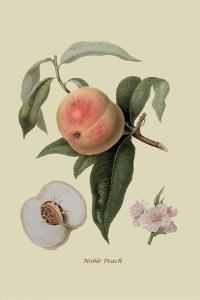 Noble Peach by William Hooker