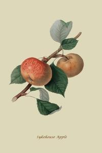 Sykehouse Apple by William Hooker