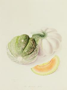 The Romana Melon, 1818 by William Hooker