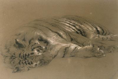 A Sleeping Tiger, 1876