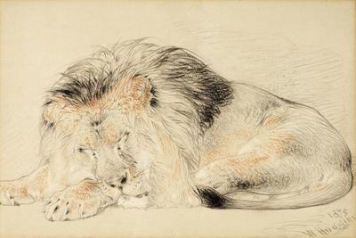 Study of a Lion, 1879