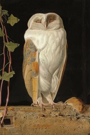 The White Owl, 1856