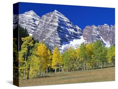 Aspen Trees Before Maroon Peaks