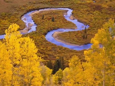 Aspen Trees Before Meandering River