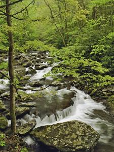Middle Prong of the Little Pigeon River Cascading over Rocks by William Manning