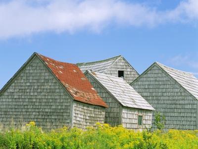 Row of Old Shingle Barns in Field
