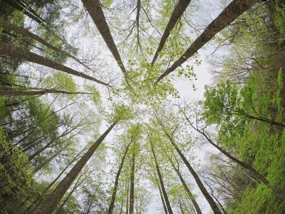 View Towards Sky in Forest