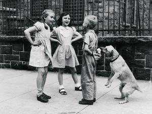 Dog Eating Ice Cream Cone Hidden behind Boy's Back by William Milnarik