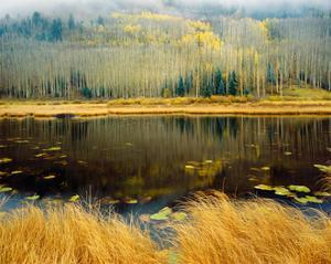 Aspen Reflections by William Neill