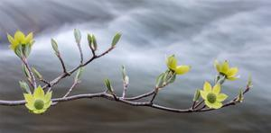 Early Spring III by William Neill
