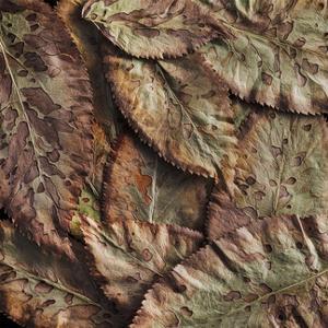 Elderberry Leaves II by William Neill
