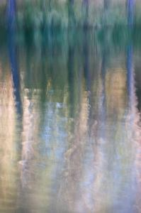Forest Reflections I by William Neill