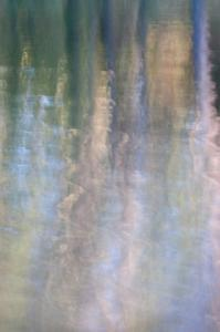 Forest Reflections III by William Neill