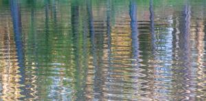 Forest Ripples II by William Neill