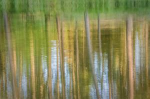 Forest Ripples III by William Neill