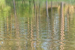 Forest Ripples IV by William Neill