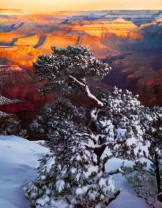Grand Canyon Sunrise by William Neill