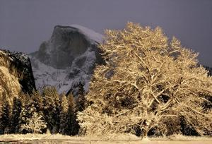 Half Dome and Elm by William Neill