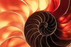 Nautilus II by William Neill