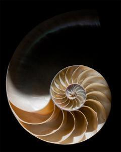 Nautilus III by William Neill