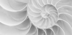 Nautilus Shell I by William Neill