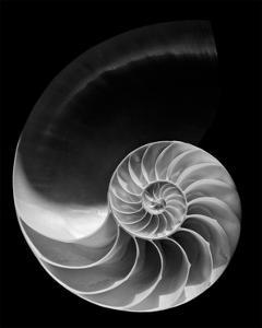 Nautilus Shell III by William Neill