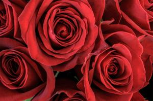 Red Roses III by William Neill