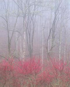 Redbud in Fog by William Neill