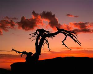 Sentinel Sunset by William Neill