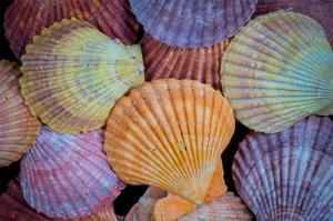 Tropic Shells I by William Neill