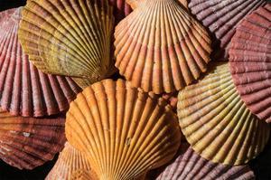 Tropic Shells II by William Neill