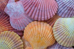 Tropic Shells III by William Neill