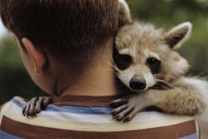 Boy Holding a Raccoon by William P^ Gottlieb