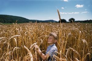 Boy Standing in Field of Wheat by William P. Gottlieb